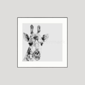 Giraffe Giclée Animal Safari Print